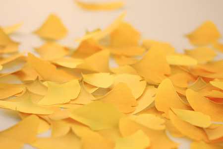 leaf-it-Ginkgo-03